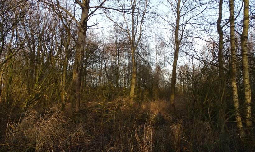 Nieuwe bos
