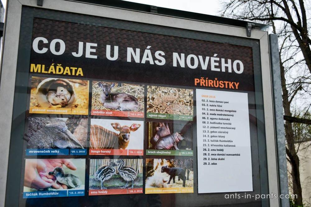 Babies in Zoo