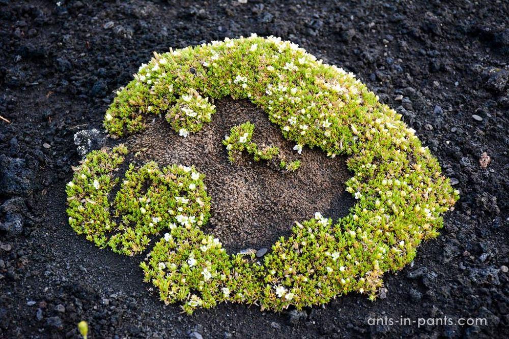 Растительность на Камчатке