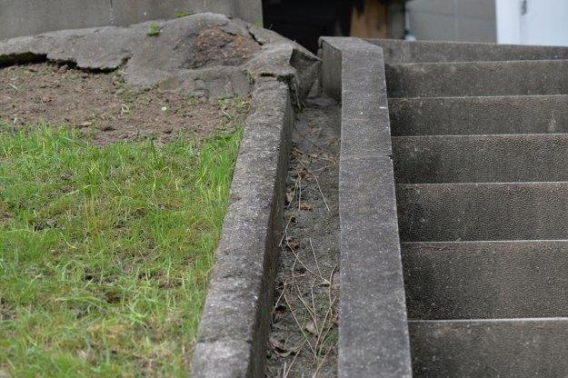 コンクリートの溝の縁を歩くクロオオアリの姿はなかった 11時56分