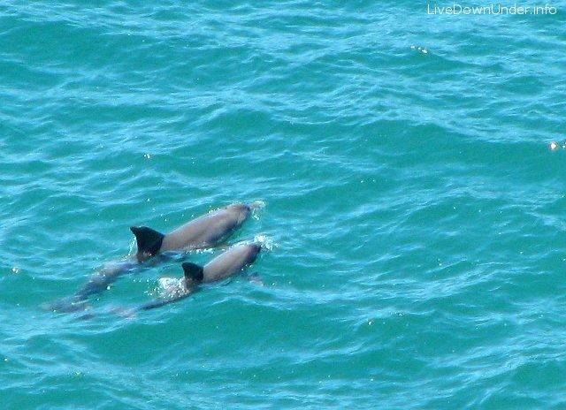 delfiny w Australii