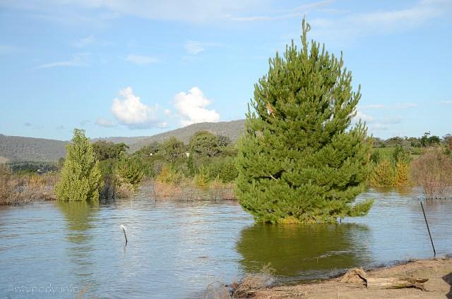 Jezioro Eildon, Wiktoria, styczeń 2011