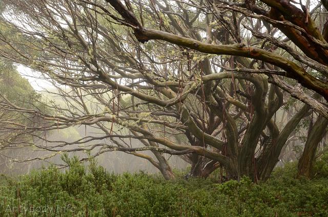 Mount Erica, Baw Baw National Park, Wiktoria, Australia