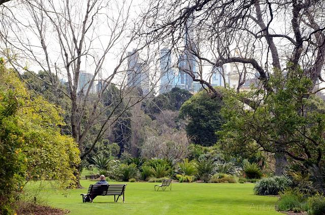 Ogród Botaniczny w Melbourne zimą