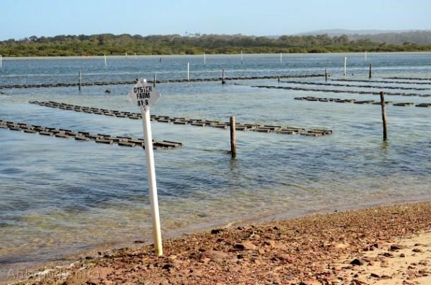 farma ostryg, Merimbula, NSW, Australia