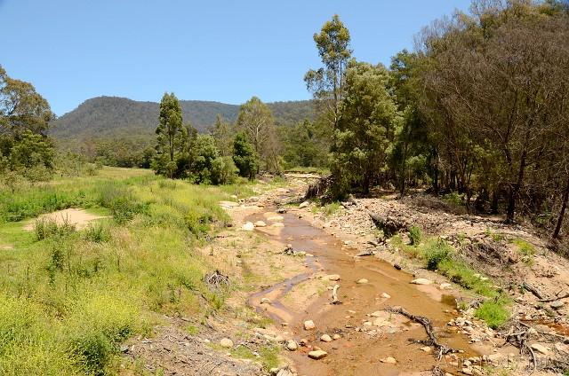 Tantawangalo State Forest, Wielkie Góry Wododziałowe, NSW, Australia