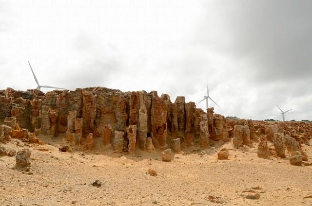 skamieniały las, Discovery Bay, Portland, Australia