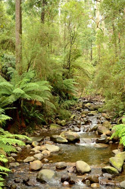 Badger Weir, Yarra Ranges National Park, Wiktoria, Australia