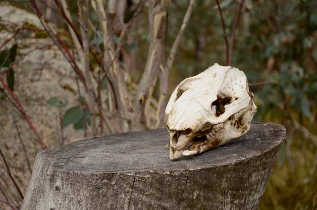 czaszka, Mount Dunn, Mount Buffalo National Park, Victoria, Australia
