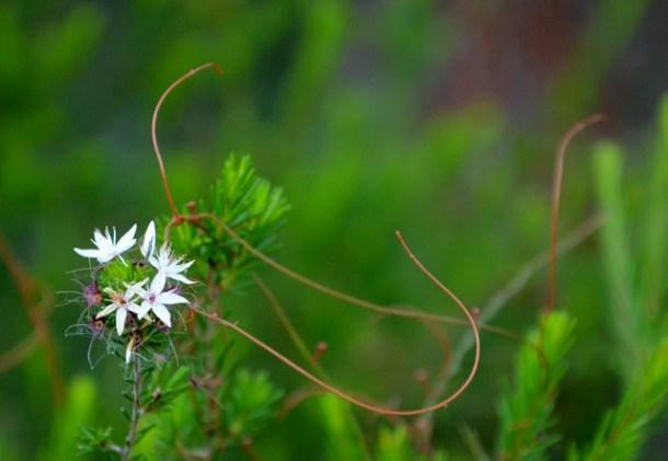 Wiosna w Górach Grampians, Australia