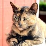 Jednokulturowe koty