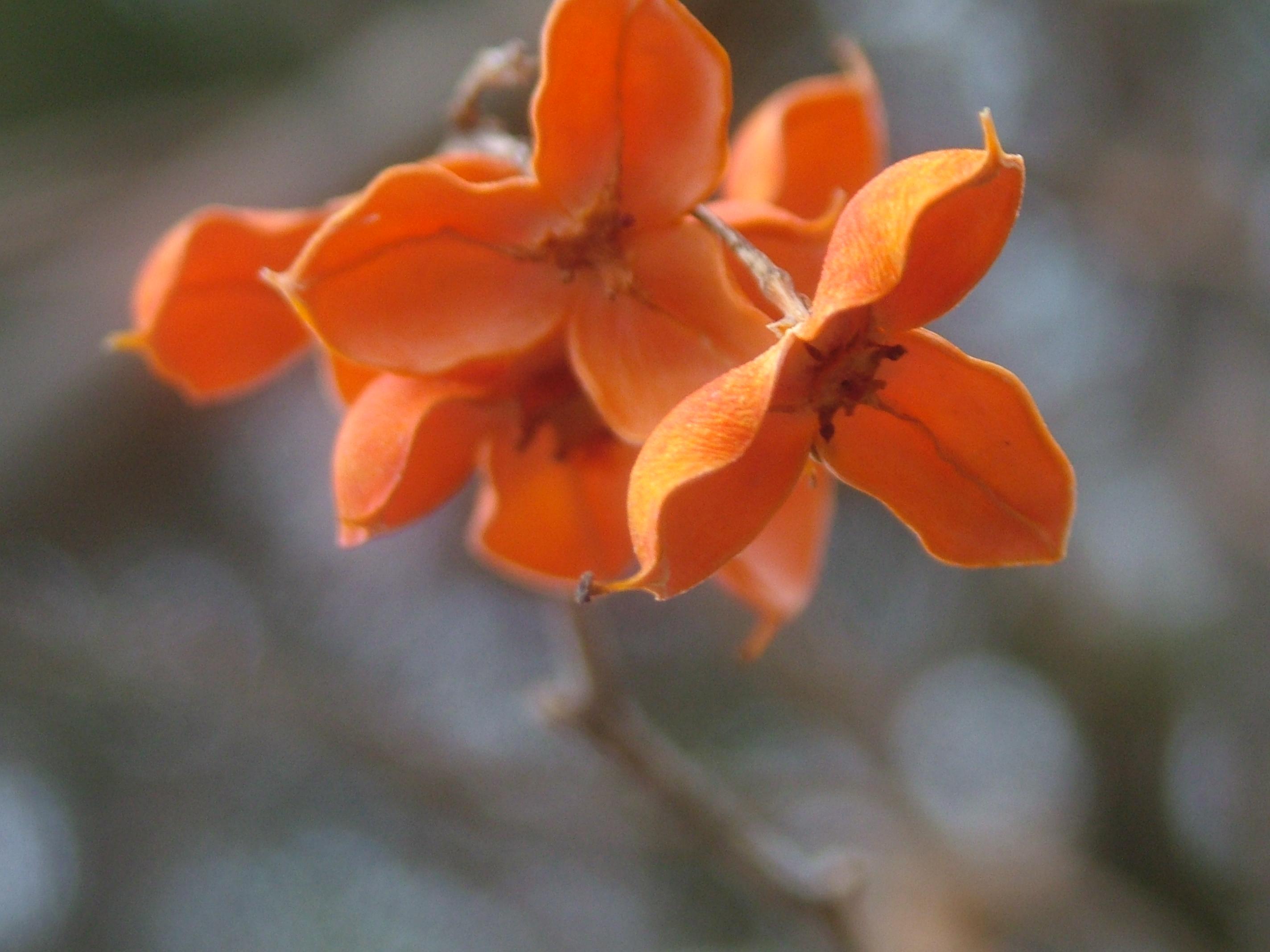 Lovely auburn flowers in winter???
