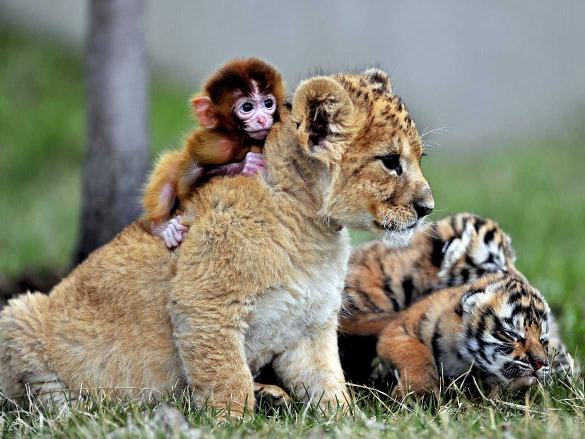 19-unlikely-animals-who-are-best-friends