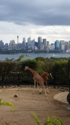 Look at this amazing view the giraffes have. I bet they don't even know it ;)