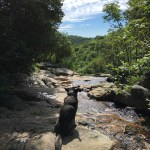 dog_watching_stream