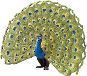 Peacock Toy Bird Miniature Replica From Animal World At