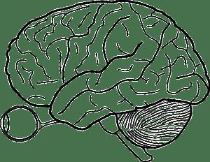 brain-40377_640
