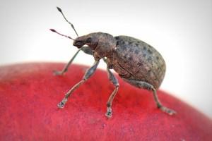 bug-369229_640