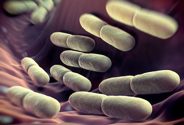 生きたまま届く乳酸菌