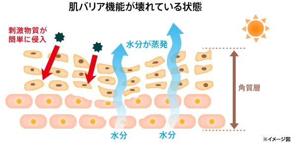 肌のバリア機能の低下