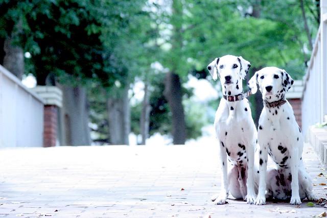 【千葉】ペットと一緒におでかけ♡西船橋駅近くでペット同伴できる飲食店のまとめ