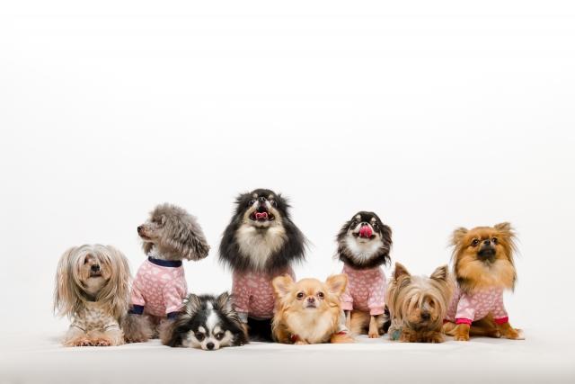 たくさんの犬が大集合