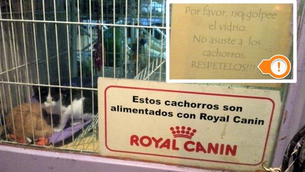 lenguaje-respeto-veterinaria-2