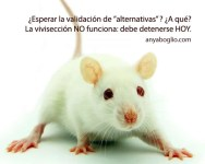 Derechos animales - antivivisección