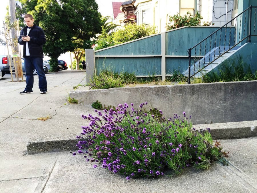 San Francisco flowers