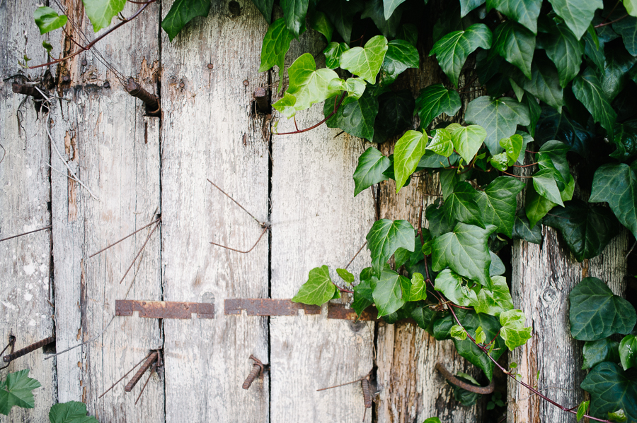 Vine covered wall