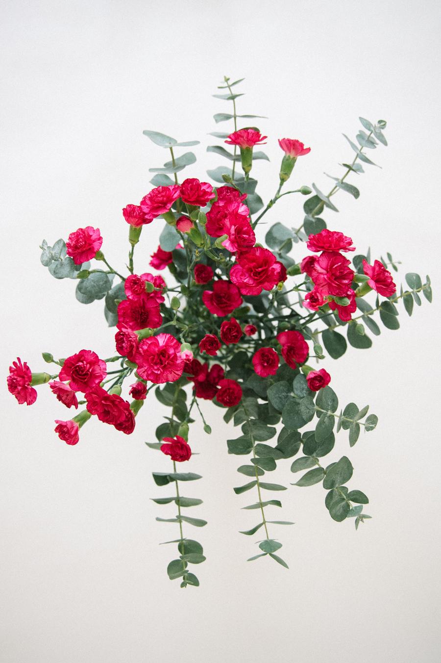 magenta carnations