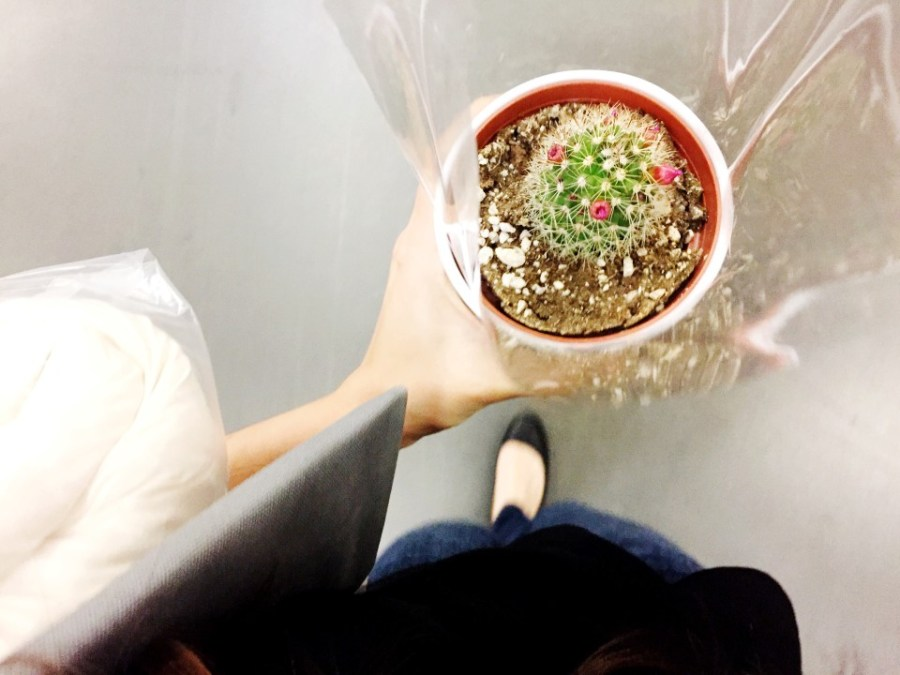 I attempt to keep a cactus alive. (Photo by Anya Semenoff)