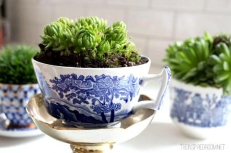 indoor-plants-teacup-garden-e1362976088405
