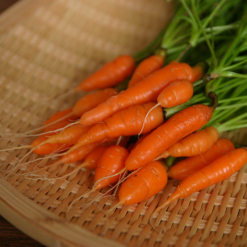 mini-cenoura