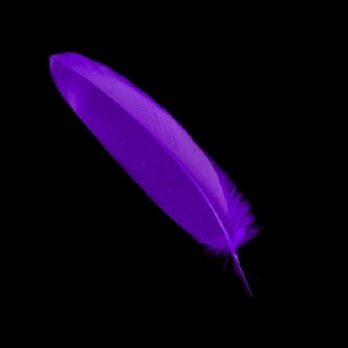 purple-quill-feathers