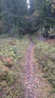 Sweet loamy, damp trails disappearing off into the woods...