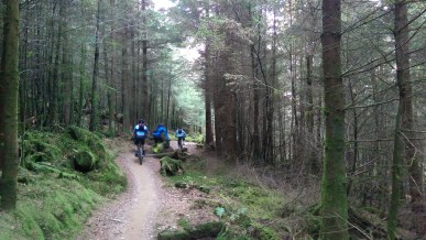 Singletrack near the top of the hill