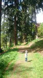 Walking at Knightshayes
