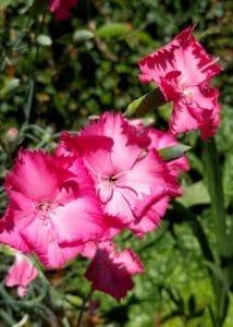 Pretty flowers in the garden