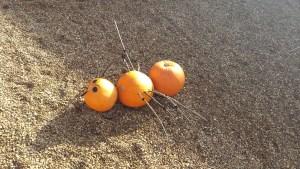 Pumpkin Spider at Holkham 2015