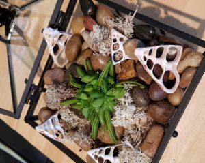 Make a Terrarium