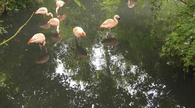 Amazona Zoo Turns 1