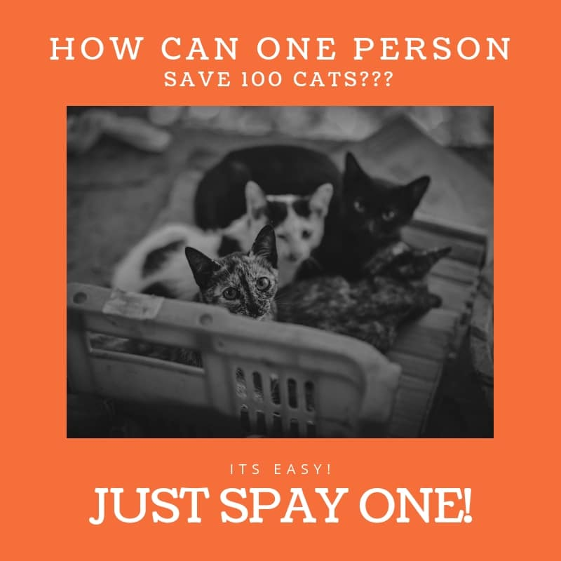 Spay Your Cats