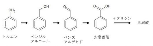 トルエンの体内代謝