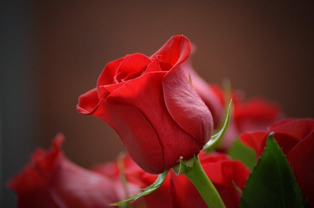 flower-3115353_1280
