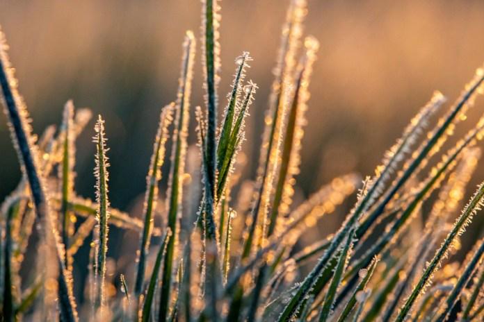 Idõjárás - Deres növények Nagykanizsa közelében