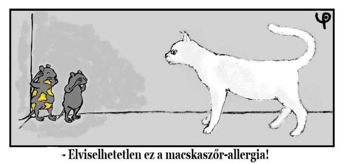 macskaszorallergia
