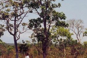 Brazilian Cerrado Vegetation