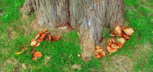 Tree and fungus