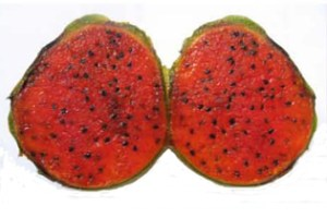 Domestication without a genetic bottleneck in Stenocereus (Cactaceae)